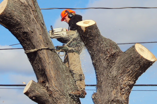 The Best Time of Year for Tree Removal
